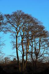 NORFOLK IMPRESSIONS II (Simon R Brook) Tags: trees sky field nikon broads 18200mm ormesby norflok d7000 simonrbrook