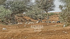 #روضة #خريم #hdr #colorful #nature #green #trees #plant #شجر #نبات #فيضة #بر #كشته #photo  #البراري #الرياض #رماح #ksa #saudiArabia #السعودية #عرب_فوتو #nature #landscape #panorama #hdr (photography AbdullahAlSaeed) Tags: trees panorama plant green nature landscape photo colorful saudiarabia hdr بر كشته ksa السعودية الرياض شجر نبات روضة خريم البراري فيضة رماح عربفوتو