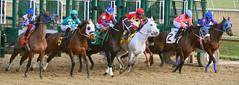 "2015-01-02 (100) r6 and they're off (JLeeFleenor) Tags: photos photography md marylandracing marylandhorseracing laurelpark jockey جُوكِي ""赛马骑师"" jinete ""競馬騎手"" dżokej jocheu คนขี่ม้าแข่ง jóquei žokej kilparatsastaja rennreiter fantino ""경마 기수"" жокей jokey người horses thoroughbreds equine equestrian cheval cavalo cavallo cavall caballo pferd paard perd hevonen hest hestur cal kon konj beygir capall ceffyl cuddy yarraman faras alogo soos kuda uma pfeerd koin حصان кон 马 häst άλογο סוס घोड़ा 馬 koń лошадь gate maryland"