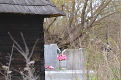 DSC_0439 (Linguaprof) Tags: sighisoara brasso tgmures rastolita targumures szentharomsag segesvar nagyszeben muntiifagaras marosvasarhely fogarasihavasok ratosnya nyaradmente raulmures dicsszentmrton segesvarivar jodvolgye marosvolgye kknyes