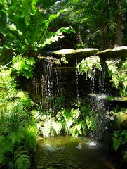 ~Oct 2009 Fairchild Gardens #4~ (endemanf) Tags: ferngrotto miamiflorida fairchildbotanicalgardens tropicalwaterfalls tropicallandscapes tropicaljunglegardens