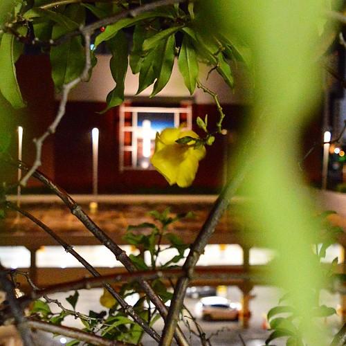 Em meio a loucura do dia a dia, encontro uma #flor e ofereço a vocês. ❤️❤️❤️🌼🌼🌼 #flowers #Salvador #Bahia #Brasil