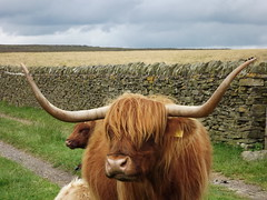 Around Baslow Edge (freestones999) Tags: baslow d derbyshire gates livestock pa paths monuments