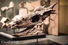 Bone Head (Patrick Ciebilski) Tags: berlin germany natural history museum animal evolution biology