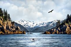 Alaska Dream (alicecahill) Tags: alaska usa baldeagle landscape alicecahill photoillustration humpbackwhale ak whale flying eagle seward composite
