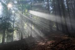 Illumination (slhdub) Tags: forest mountain hiking alpine trekking nature outdoor mirrorless fog myst beautiful scenery climbing mountaineering landscape carpathians