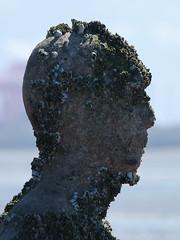 DSCF0671 (SierPinskiA) Tags: sea shells beach liverpool sand ironman pools barnacles ironwork mayday seashore merseyside anthonygormley irishsea 2016 anotherplace crosbybeach blundellsands fujixs1