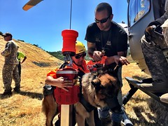 California National Guard (The National Guard) Tags: california ca cang search rescue training exercise helicopters interagency hoisting canine dog nationalguard national guard ng guardsman guardsmen soldier soldiers us army united states america usa military troops