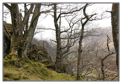 Exploring the Lake District (Audrey A Jackson) Tags: canon60d cumbria lakedistrict nature trunks branches grass 1001nightsmagiccity