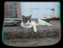 Cyber Chillin' 5 - Anaglyph 3D (DarkOnus) Tags: cat pennsylvania buckscounty huawei mate8 cell phone 3d stereogram stereography stereo darkonus closeup cyber feline chillin framed