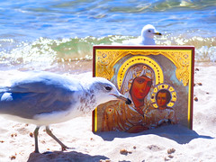 beach7 (jonathan.carroll484) Tags: birds bird seagull seagulls mary theotokos jesus beach ocean waves lake lakemichigan perspective