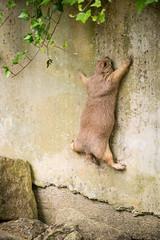 2016-07-15-13h31m56.BL7R0168 (A.J. Haverkamp) Tags: canonef100400mmf4556lisiiusmlens hagondange alsacechampagneardennelorrain france prairiehond cynomys prairiedog amnéville zoo dierentuin httpwwwzooamnevillecom alsacechampagneardennelorraine