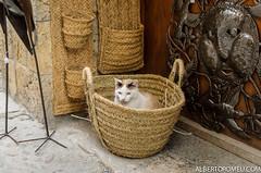 Gato con SIDA (aromeu) Tags: besal