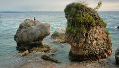 Miramare, Trieste (ScotchBroom) Tags: miramare trieste friuliveneziagiulia fvg italia italy evening eveninglight adriatic adriatico adriaticsea sea mare rocks cormorants