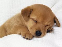 ARIO (Animalia Professional) Tags: meticcio narni animalia cane cani cuccioli cucciolo animalidomestici canile adottauncane cucciolidaadottare caniinadozione adozionecani razzedicane pensionepercani amicia4zampe animaledomestico adozionecane caneinadozione animaledacompagnia