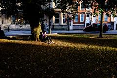 Bristol; August 2016 (Daniel Durrans) Tags: grass shadow sitting street squinting buildings light leaves man urban collegegreen bristol park treetrunk tree sunlight streetphotography