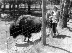 (trekbody) Tags: eileenfewerterry miketerry fewerfamily iphotoedited itasca itascastatepark minnesota patrickterry relatives terryfamily usa