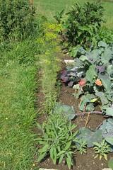 My garden (XV) (dididumm) Tags: harvesttime summer garden vegetables herbs growing wachsen kruter gemse sommer garten ernte erntezeit