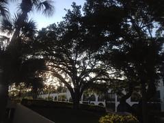IMG_9143 (A Million Shards of Light) Tags: life travel trees light sunset sky love nature florida verdant lush oaks vero robles