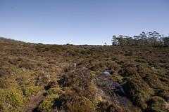 Mount Field East