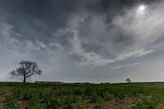 farmland (Steven Peachey) Tags: sky cloud field canon eos exposure durham farmland manfrotto ef1740mmf4l shincliffe lee09gnd leefilters canon6d hawkdog