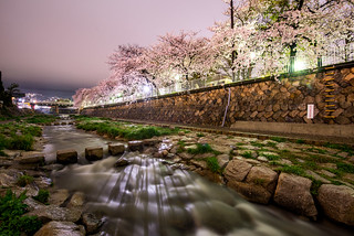 Sakura at night near Hankyu Oji-koen Station