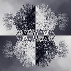 Treeflections 2
