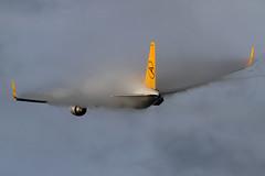 Condor Boeing 767-31B/ER D-ABUM (Mark Harris photography) Tags: alaska plane canon aircraft planes spotting panc