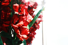 Red Flowers (kylebagleyphotos) Tags: flowers red nature bokeh overexposure
