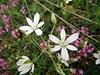 Divčibare 088 (jecadim) Tags: flowers wild mountain trekking spring hiking meadow divčibare