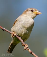 081 (rogerbo69) Tags: tiere wildlife natur vogel byrd wwwfacebookcomsvofoto