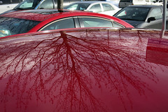 Tree Reflected in a Car's Roof (Blinking Charlie) Tags: redcars reflection tree parkinglot kent washingtonstate usa canonpowershots110 blinkingcharlie 2016