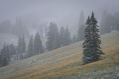 July Snow (HubbleColor {Zolt}) Tags: trees dunravenpass wildflowers wy meadow yellowstonenationalpark snow travel wyoming