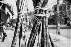Sugarcane (whitworth images) Tags: street city nepal cane outdoors asia long sugar tied bundle footpath pokhara bundles sugarcane wares kaski indiansubcontinent