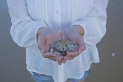 Memories (Andrezza Haddaway) Tags: beach memories sanddollar hands
