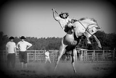 Filipe Simes (Eduardo Amorim) Tags: gacho gachos gaucho gauchos cavalos caballos horses chevaux cavalli pferde caballo horse cheval cavallo pferd crioulo criollo crioulos criollos cavalocrioulo cavaloscrioulos caballocriollo caballoscriollos pampa campanha fronteira bag riograndedosul brsil brasil sudamrica sdamerika suramrica amricadosul southamerica amriquedusud americameridionale amricadelsur americadelsud cavalo         hst hest hevonen  brazil eduardoamorim jineteada gineteada