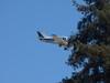 CRW_4119-c1 (Farhill) Tags: airplane bellanca bellancaviking n28066