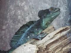 DSCF0178 (Stonehenge 68) Tags: zoo birmingham snake alabama lizard plantation antebellum birminghamzoo arlingtonhouse
