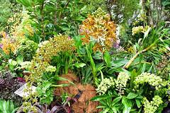 Secrete Garden (chooyutshing) Tags: flowers orchids secretegarden singaporegardenfestival2016 themeadow gardensbythebay baysouth marinabay singapore