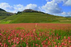 Castelluccio in pink (annalisabianchetti) Tags: pink flowers landscapes fields paesaggio umbria castellucciodinorcia pianadeimontisibillini