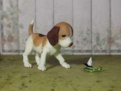 IMG_9631 (as.vice) Tags: pet beagle puppy makeup bjd faceup iplehouse sphinxvice