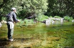Flyfishing en el Barbellido (eRdAvE) Tags: barbellido vila flyfishing gredos