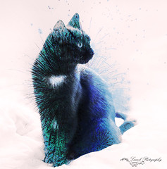the cat.....a dream (laurek.photography) Tags: pet color art cat fantastic chat special effect tup