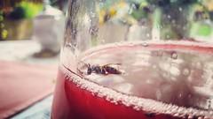 Sono un' #ape che nuota in un #mare di #alcool (valeriavonteese) Tags: instagramapp square squareformat iphoneography uploaded:by=instagram sierra ape aperitivo vino alcool varsavia nuotare