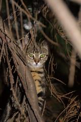 Camouflage (ArtGordon1) Tags: cat feline animal london england walthamstow davegordon davidgordon daveartgordon davidagordon daveagordon artgordon1
