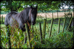 Horse look. (CWhatPhotos) Tags: artistic countryside outdoors open air photography cwhatphotos angle view photographs photograph pic pics photo photos images foto fotos that have which contain with canon 5d iii mk eos dslr sacriston near nearsacriston tree trees wood animal creature horse field standing still look looking you summer time green dof depth fenced fence wire