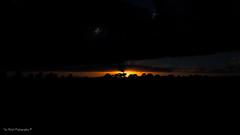 DSC_0159 (timmie_winch) Tags: nikon nikond3000 d3000 august august2016 2016 sun sunset sunsetsuffolk sunsetoversuffolkcountryside sunsetovercornfields sunsetovercornfield silhouette 18105mm 18105vr nikon18105mmvrlens shadows golden goldenhour goldenlight elliedunn ellie eleanordunn ells eleanor ellsdunn dunn landscape landscapephotography landscapephotographer naturephotographer naturephotography nature timwinchphotography tim timwinch winch debenham ip14 suffolk