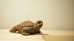 Turtle (SheehanRaziel) Tags: stil life turtle desk wooden