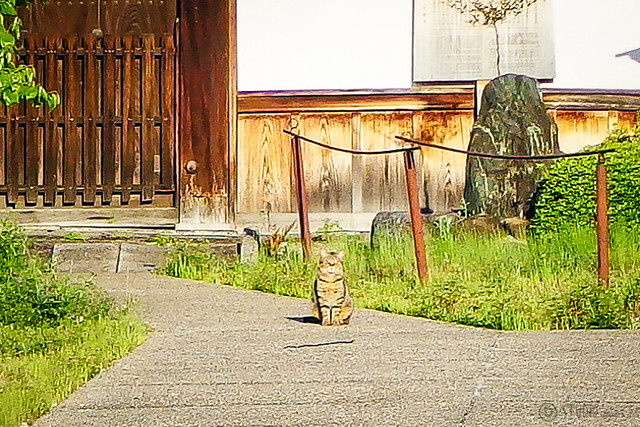 Today's Cat@2015-04-26