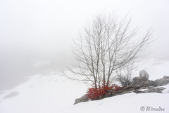 tree in the snow (Mimadeo) Tags: trees winter blackandwhite white mist snow black cold tree leaves misty fog season landscape frost snowy foggy copyspace itxina